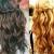 Frisuren Hochzeit Für Lange Gewellte Haare Mit Zöpfen An Der Spitze, Und Das Bild Sieht Deutlich, Von Hinten, Ist Für Blonde Haare, Schwarze Oder Braune Haare